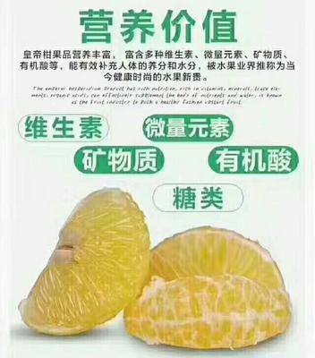广东韶关仁化县皇帝柑 3.5 - 4cm 2 - 3两