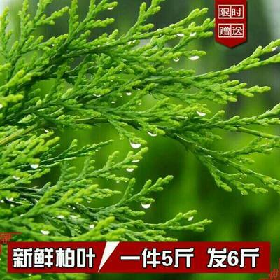 广西壮族自治区钦州市灵山县黄柏