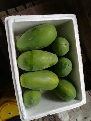 广东省茂名市高州市红心木瓜 1.5 - 2斤