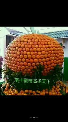 江西抚州南丰县蜜桔 2.5 - 3cm 1两以下