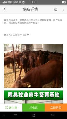 这是一张关于牛 200-300斤 统货的产品图片