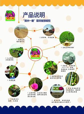 河北省唐山市滦县水果萝卜 1.5~2斤