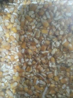 这是一张关于玉米渣的产品图片