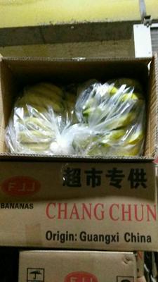 河北邯郸广西蕉 八成熟 40 - 50斤