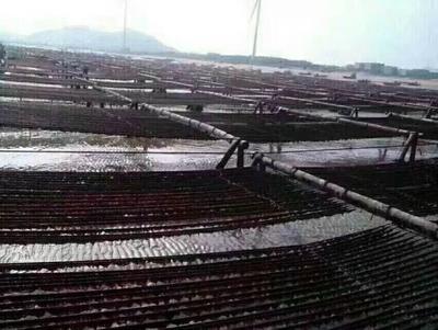 福建泉州晋江市头水紫菜