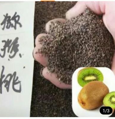 陕西西安周至县猕猴桃种子