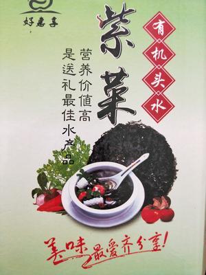 浙江台州玉环县头水紫菜