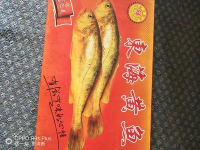 江苏泰州姜堰区大黄鱼 野生 0.5公斤以下