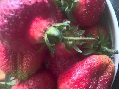 河北省石家庄市元氏县美13草莓 20克以上