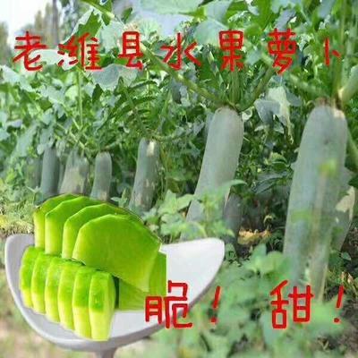 山东省潍坊市寒亭区青皮绿萝卜 1~1.5斤