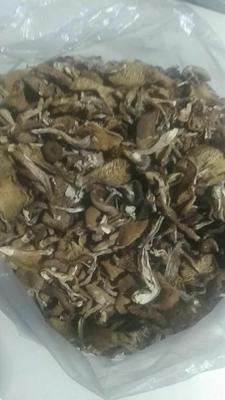 黑龙江齐齐哈尔克山县蘑菇