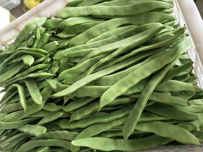 云南楚雄元谋县绿扁豆 2cm以上 15cm以上