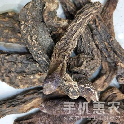 青海省西宁市城东区锁阳