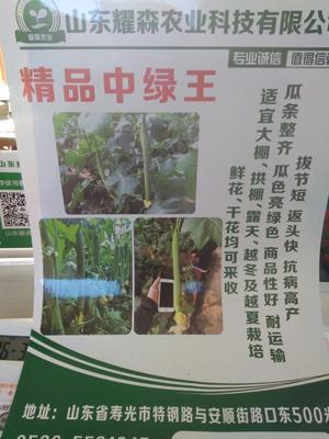 山东省潍坊市寿光市中绿丝瓜 60cm以上