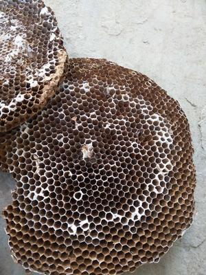 安徽省合肥市瑶海区蜂房