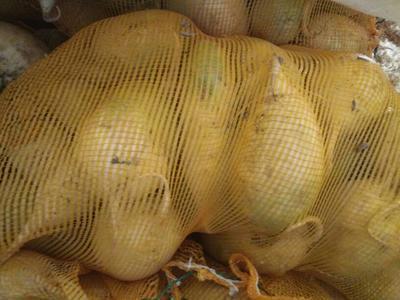 甘肃省定西市陇西县青皮萝卜 1~1.5斤