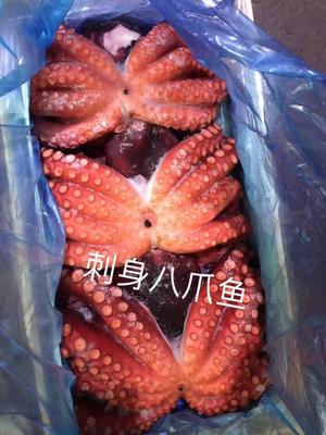 广东省广州市荔湾区八爪鱼