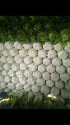河南省商丘市夏邑县87-114白菜 3~6斤 净菜