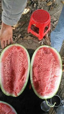 云南红河弥勒市P2西瓜 无籽 2茬以上 9成熟 15斤打底
