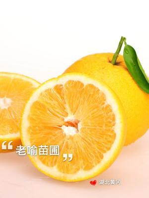 湖北黄冈黄州区胡柚苗