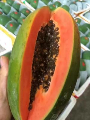 广东广州白云区红心木瓜 2 - 2.5斤