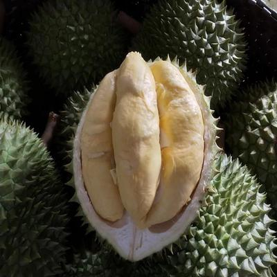 广西南宁西乡塘区金枕头榴莲 60 - 70%以上 4 - 5公斤