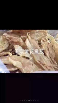 广东江门恩平市正宗黄花鱼肚 野生 0.5公斤以下
