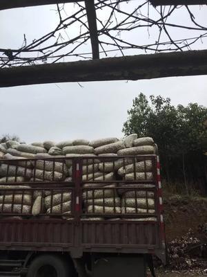 四川省成都市双流县秋葵烘干裁段半成品 3 - 6cm