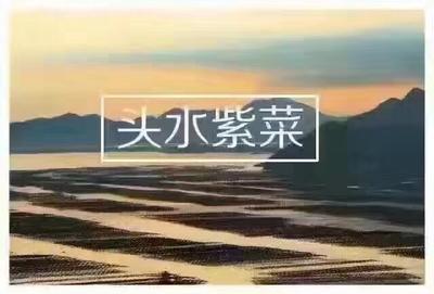 浙江温州苍南县苍南紫菜