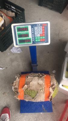 广西南宁江南区越南菠萝蜜 15斤以上