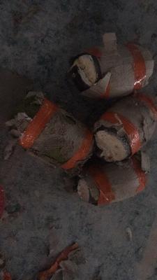 广西南宁江南区越南菠萝蜜 10斤以下