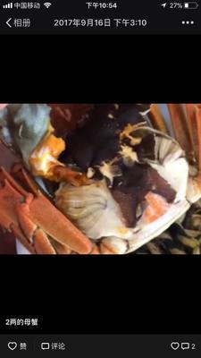 江苏泰州兴化市兴化大闸蟹 2.0-2.5两 母蟹