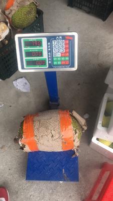 广西南宁江南区越南菠萝蜜 10-15斤