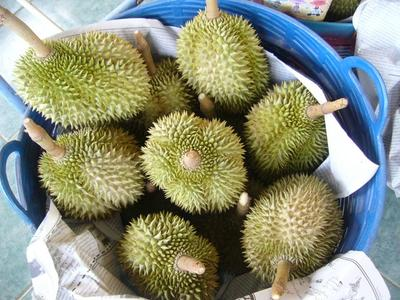 广东广州白云区金枕头榴莲 80 - 90%以上 4 - 5公斤