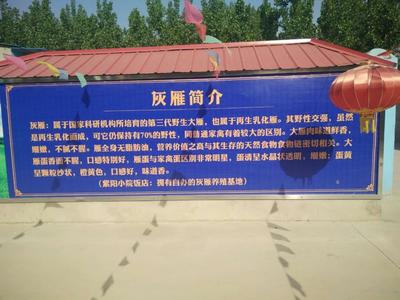 河南省濮阳市华龙区灰雁