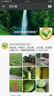 湖北省荆门市钟祥市旺旺甘蓝 2.0~2.5斤