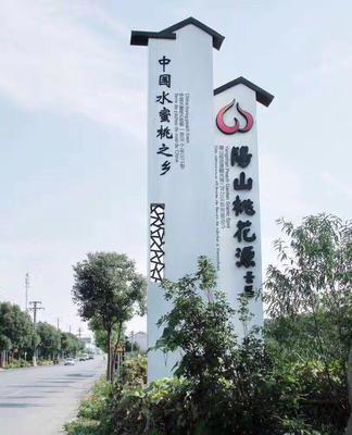 江苏无锡惠山区银杏实生树