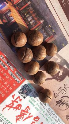 山东临沂沂水县夏威夷果 6-12个月 散装