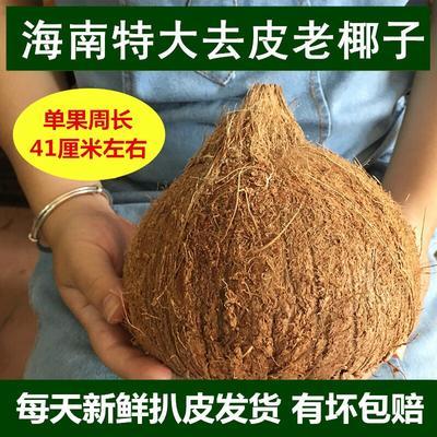 广东湛江徐闻县椰皇 2 - 2.5斤