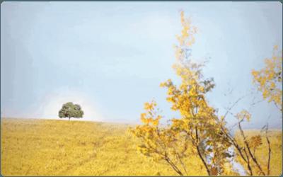 宁夏中卫沙坡头区荞麦壳