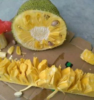 海南海口秀英区海南菠萝蜜 15斤以上