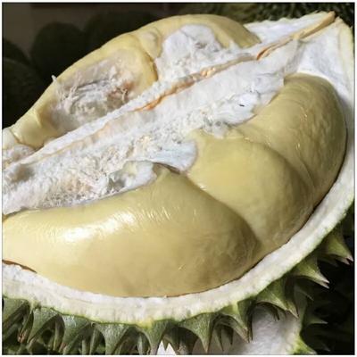广西南宁西乡塘区猫山王榴莲 80 - 90%以上 4 - 5公斤