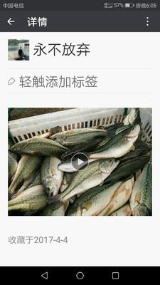 浙江湖州南浔区加州鲈鱼 人工养殖 1-1.5公斤
