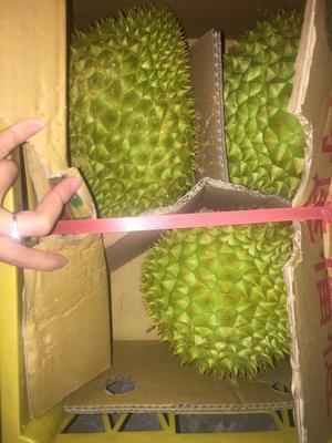 广西崇左凭祥市干荛榴莲 80 - 90%以上 3 - 4公斤