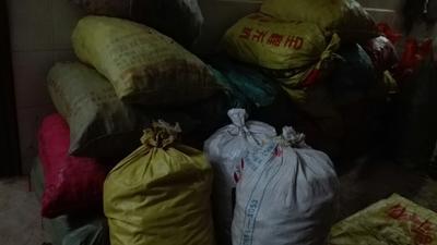 广西南宁宾阳县芋头种子 1cm以上