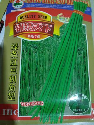 安徽阜阳临泉县绿翡翠长豆角 70cm以上 不打冷