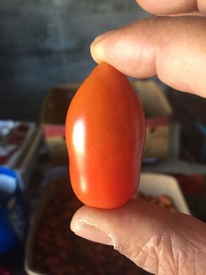 辽宁丹东东港市409小柿子