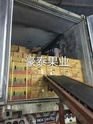 云南西双版纳景洪市泰国菠萝蜜 10斤以下