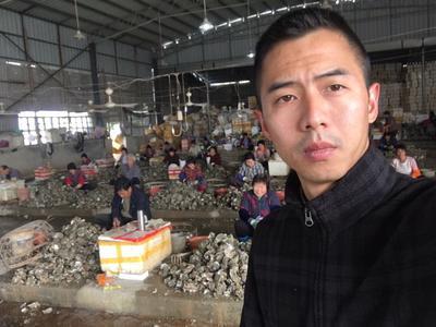 广东潮州饶平县野生生蚝 人工殖养 3-5只/公斤