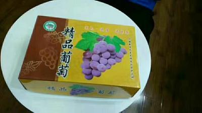 河北石家庄晋州市巨峰葡萄 5%以下 1次果 0.8-1斤